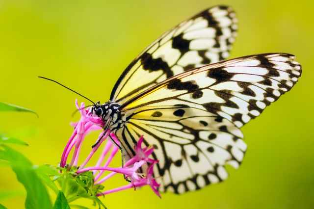 close up of butterfly pollinating flower