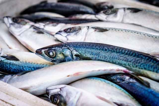 fish seafood market sea
