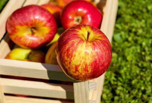red yellow apples on wooden basket