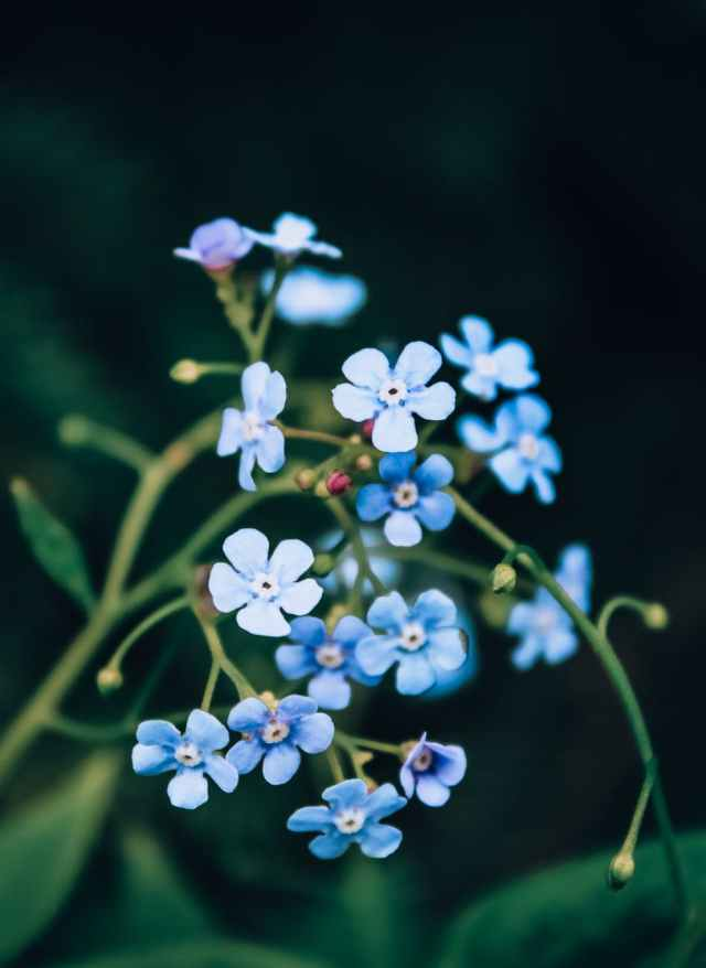 selective focus photography of blue petaled flowers