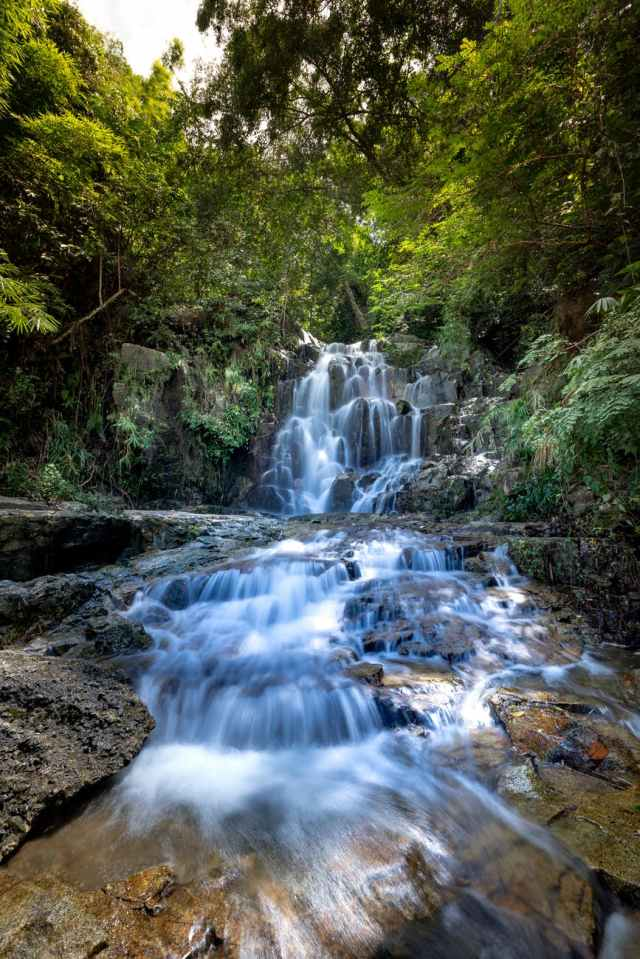 cascading water falls in woods