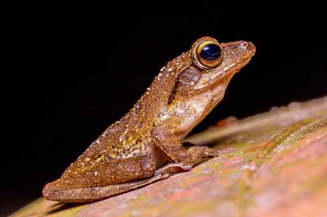 photo of brown frog on green moss