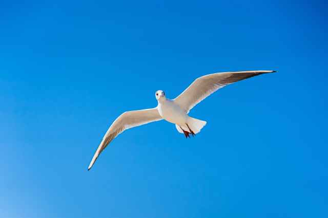 white gull flying under blue sky