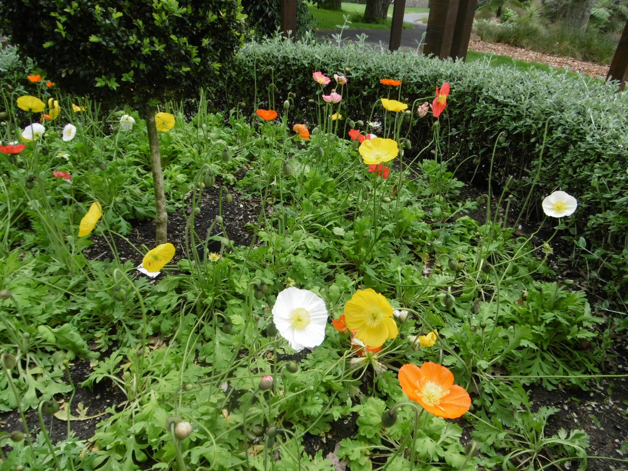 auckland-botanic-gardens-20160926-70