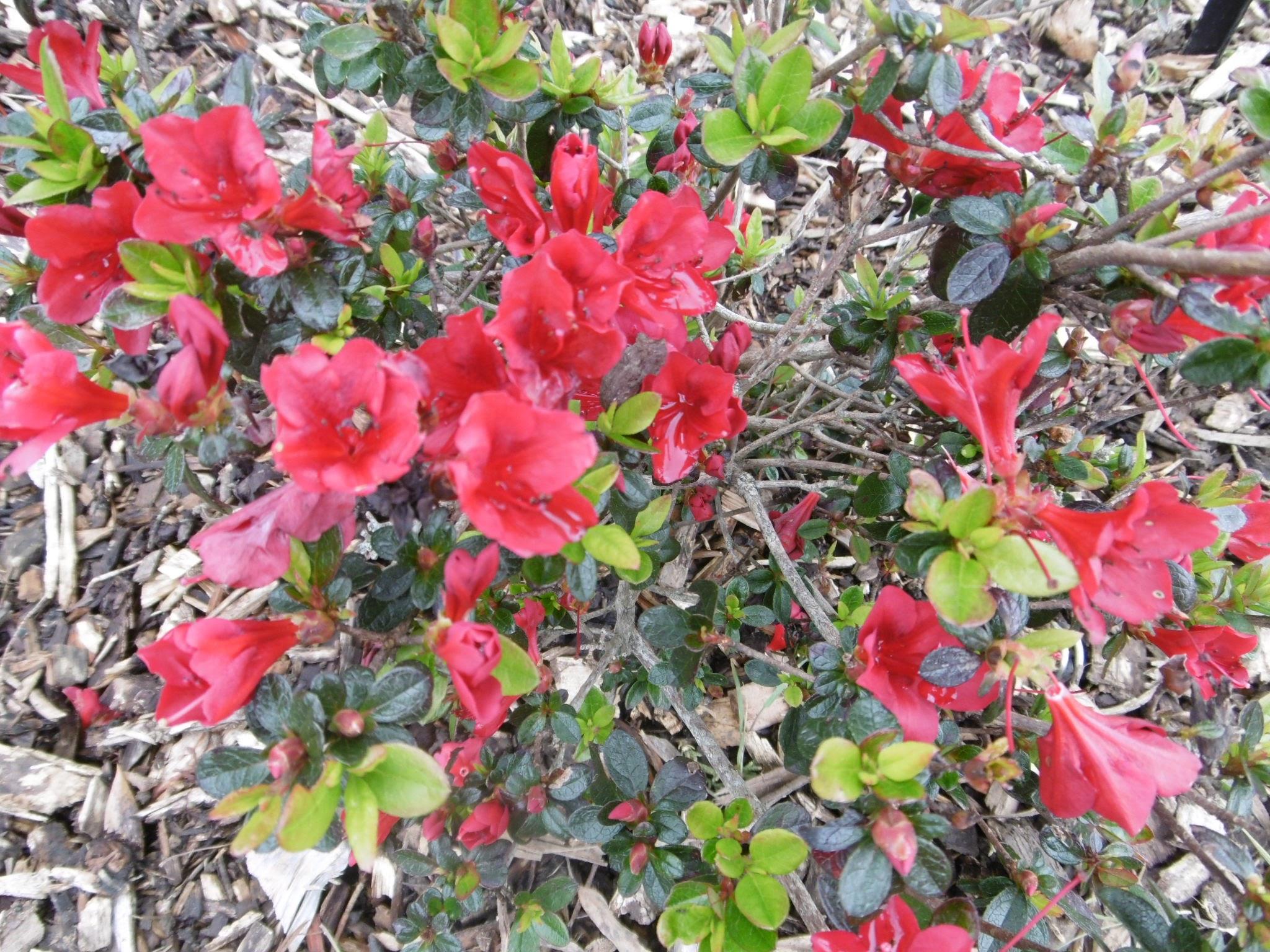 auckland-botanic-gardens-20160926-77