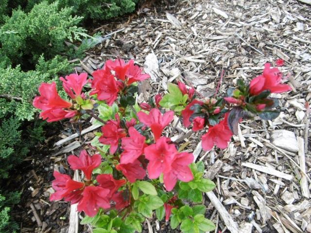 auckland-botanic-gardens-20160926-78