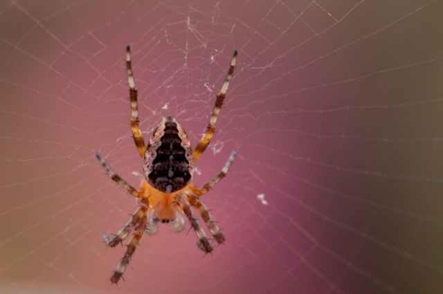 animal arachnid blur close up
