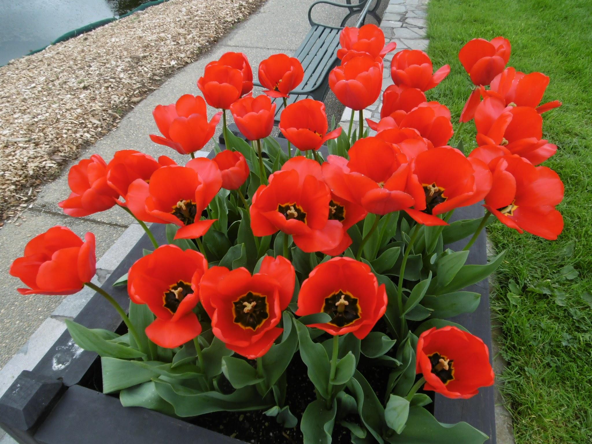 auckland-botanic-gardens-20160926-43