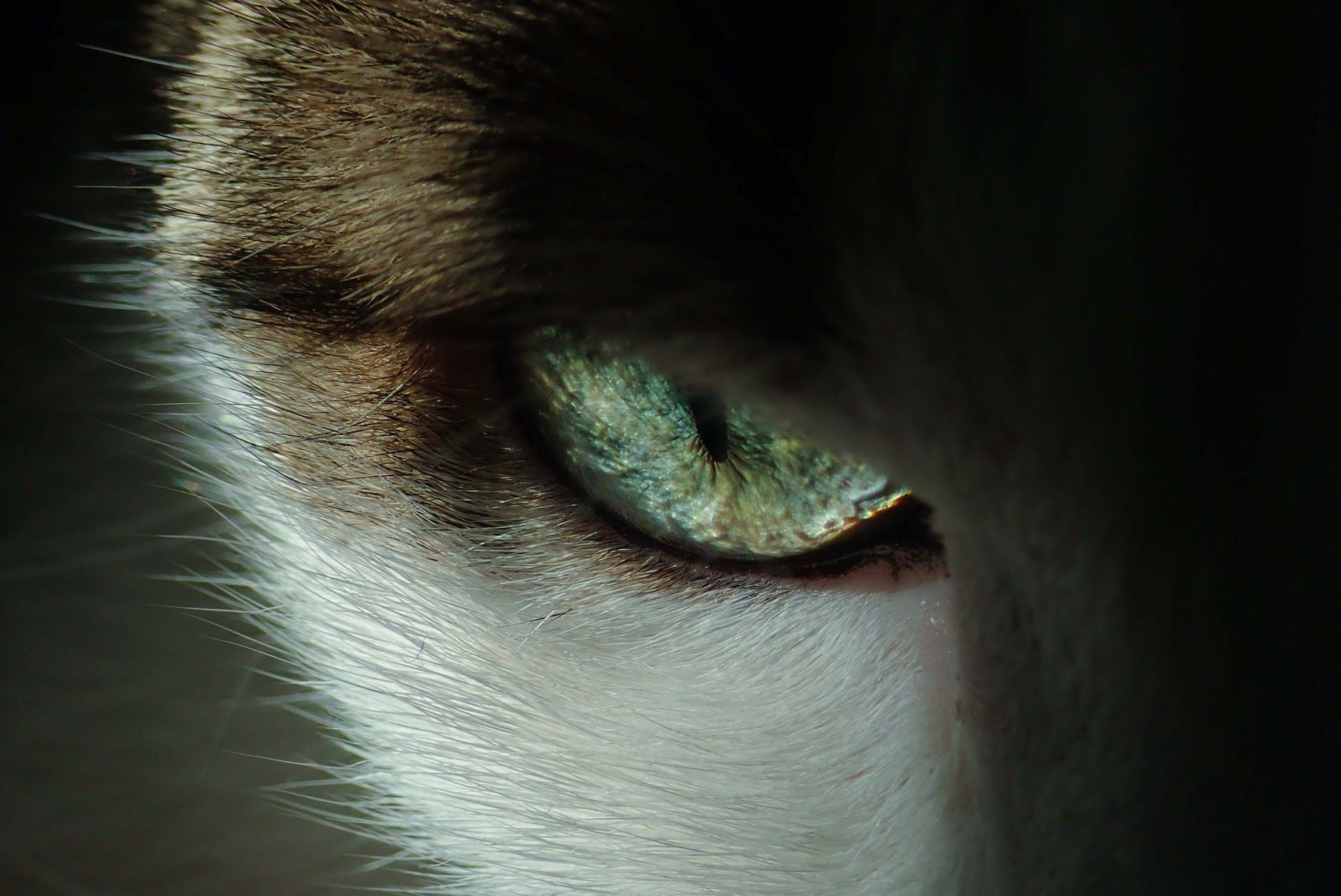 close up photo of cat s eye
